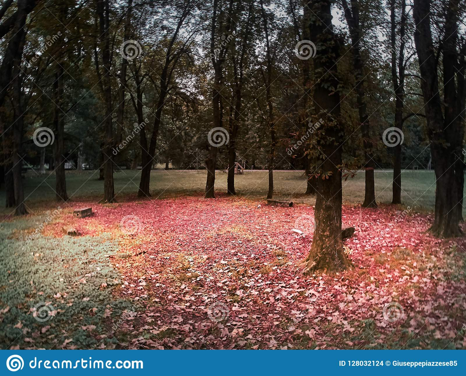 Het schot van een cirkel van bomen en banken met een rood verlaat vloer