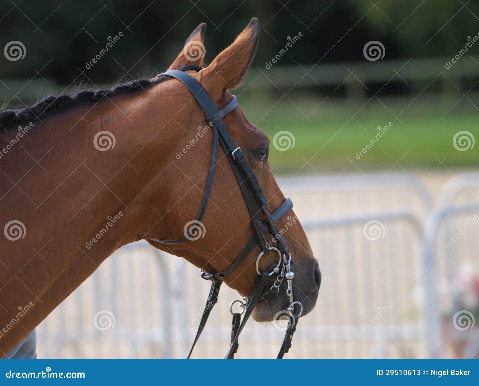 Het Schot van het Hoofd van het paard