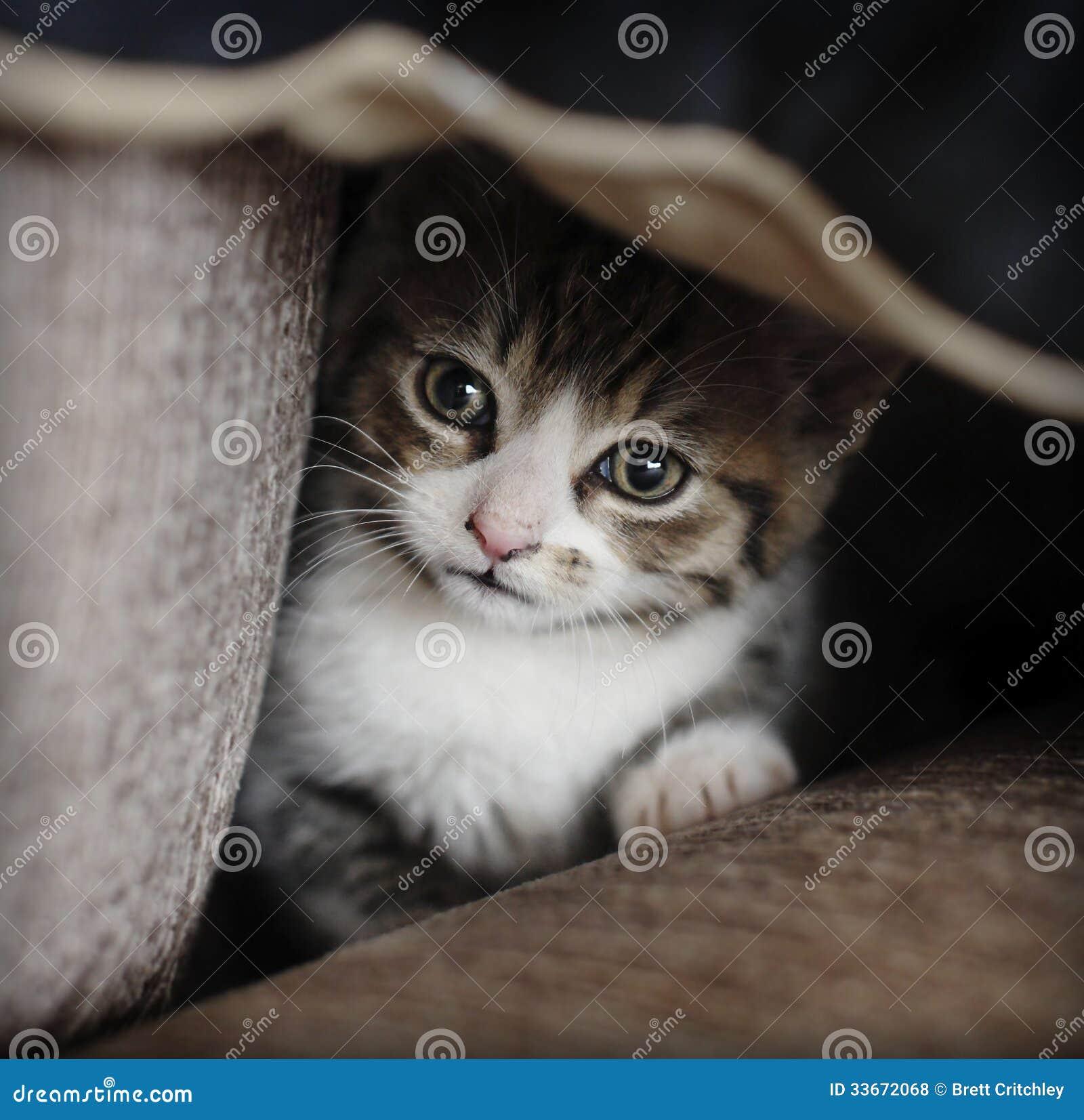 Het schuwe katje verbergen