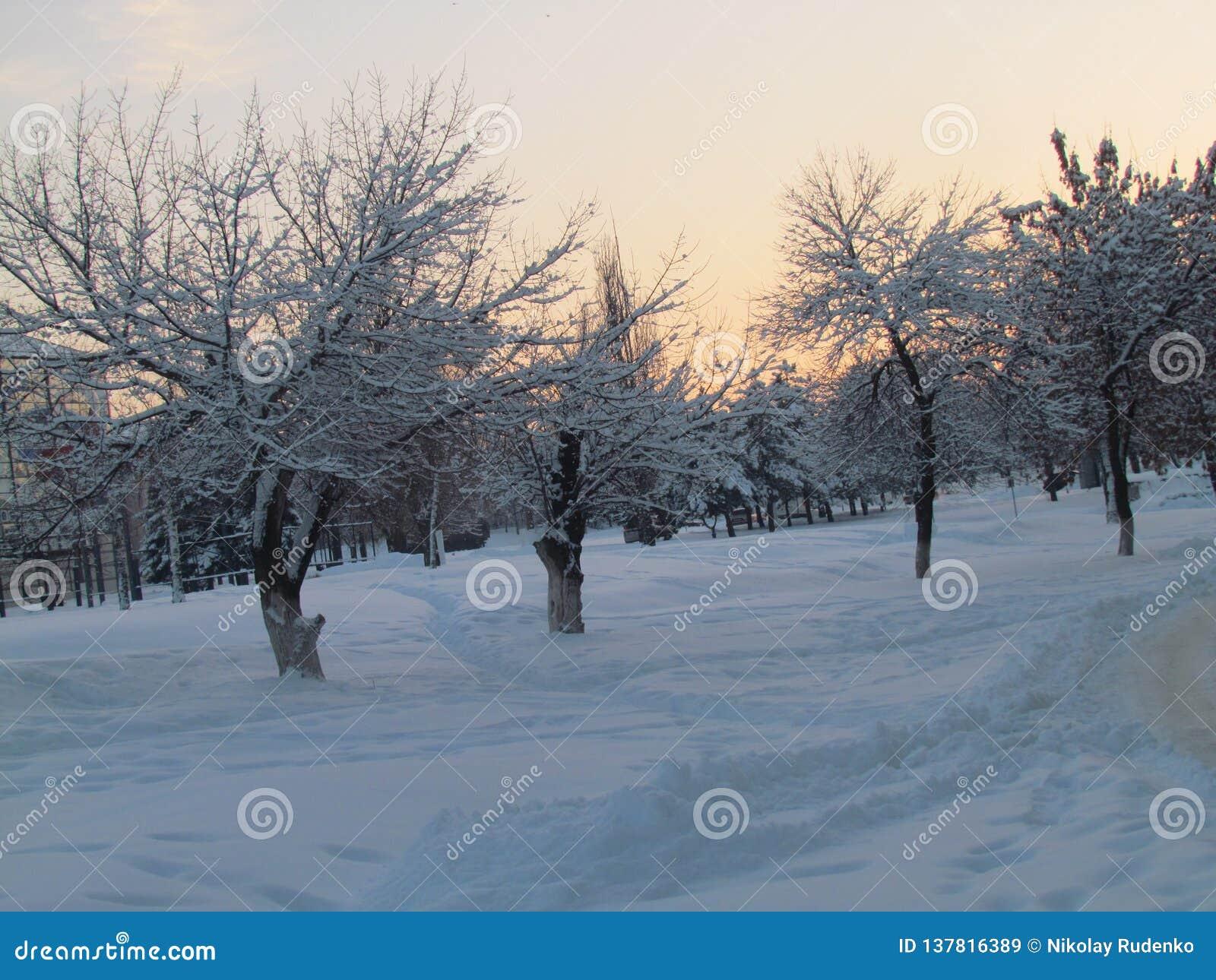 Het silhouet van bomen befringed met sneeuw