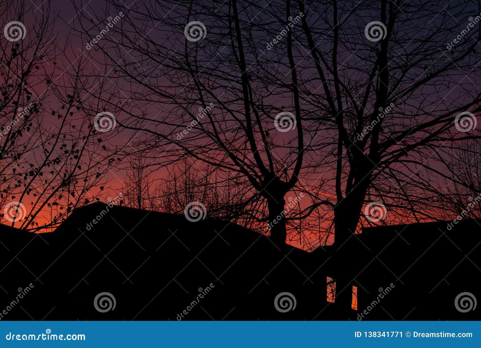 Het silhouet van bomen bij zonsondergang in de stad