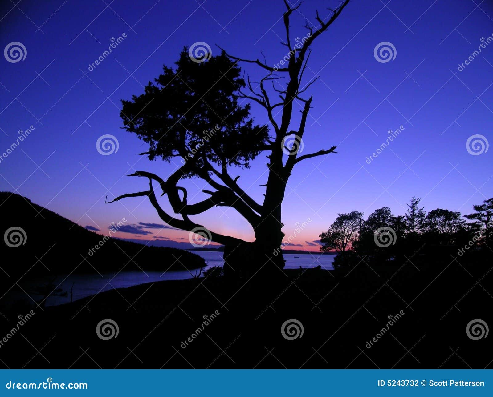 Het Silhouet van de boom bij Schemer