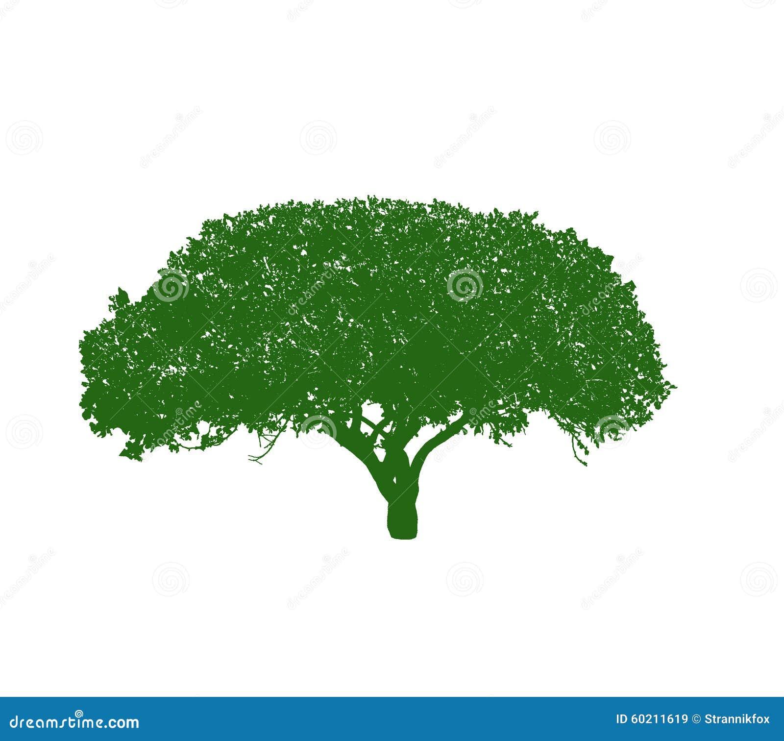 Het silhouet van de boom op witte achtergrond