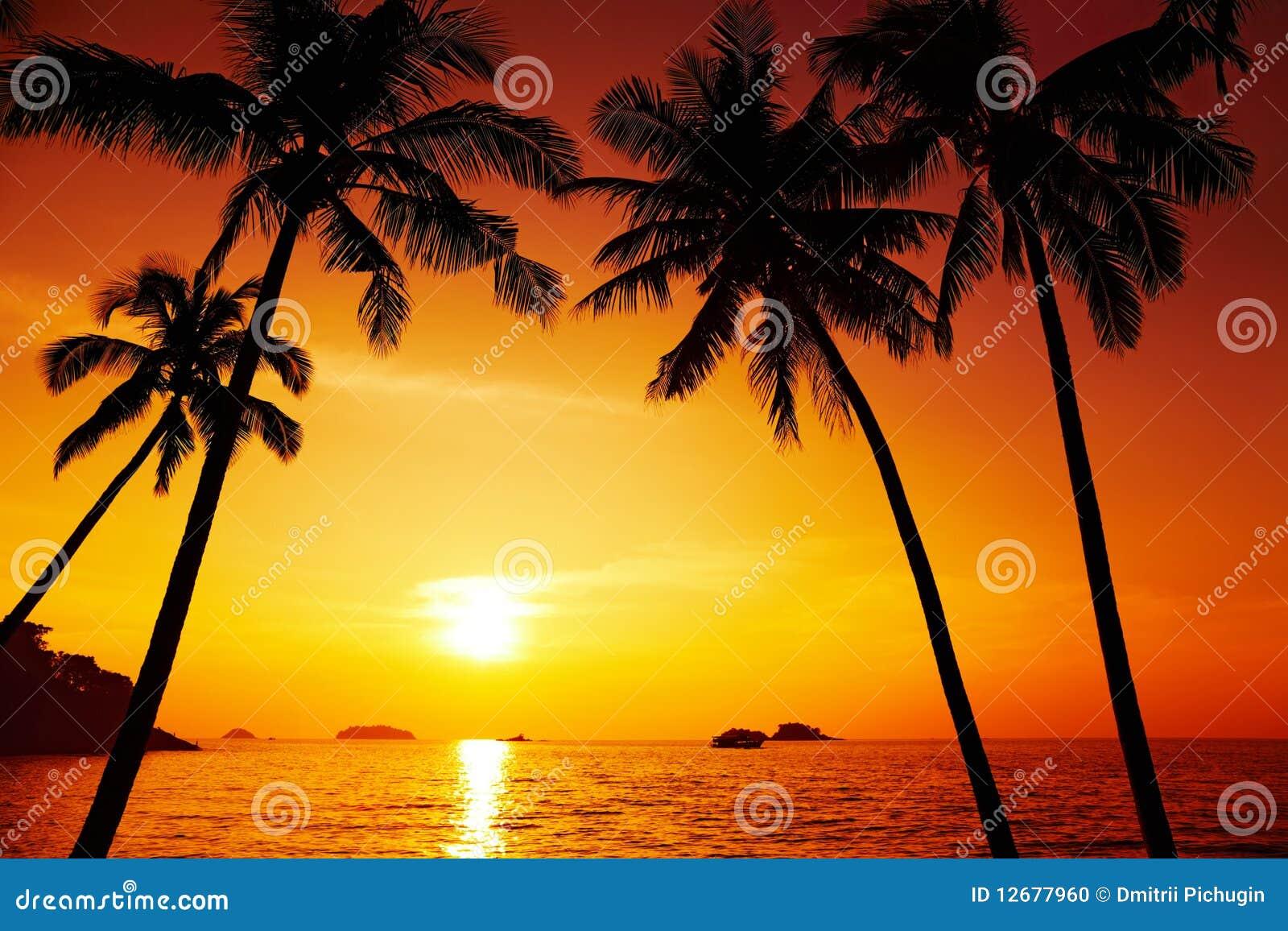 Het silhouet van palmen bij zonsondergang