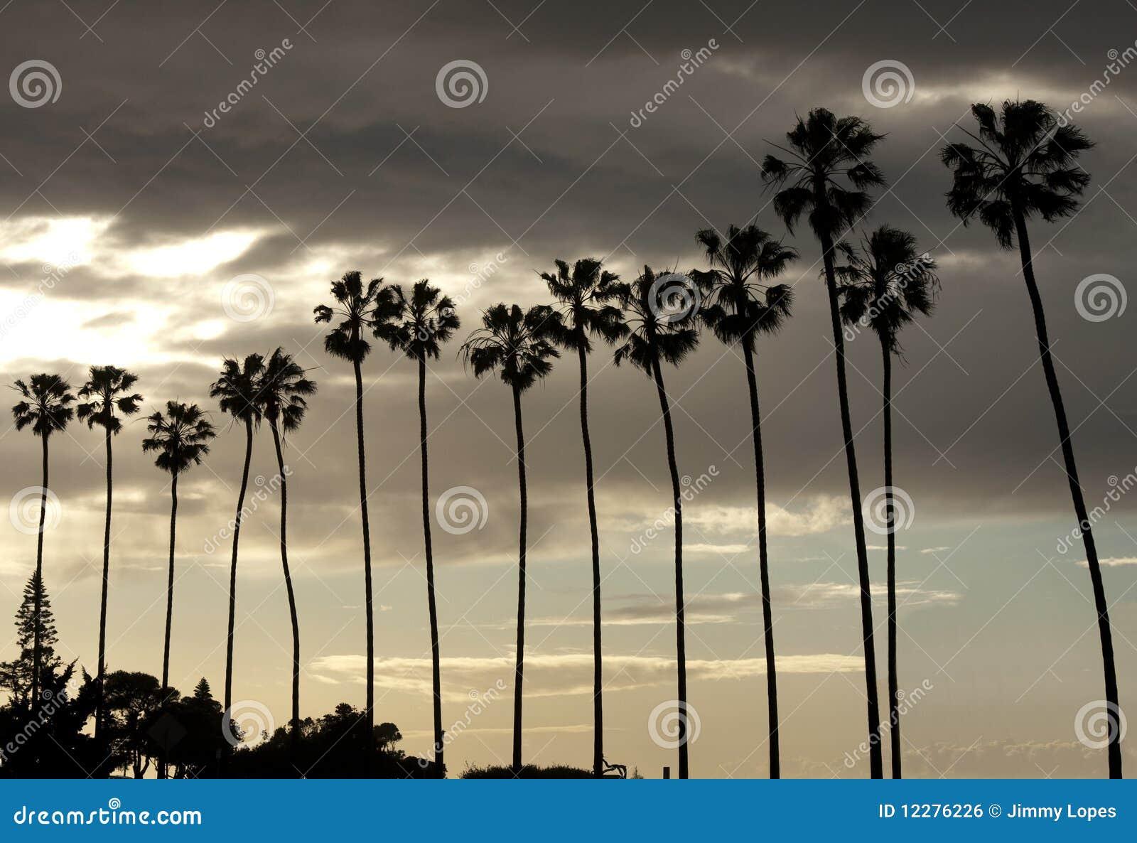 Het Silhouet van palmen op de Hemel van de Zonsondergang