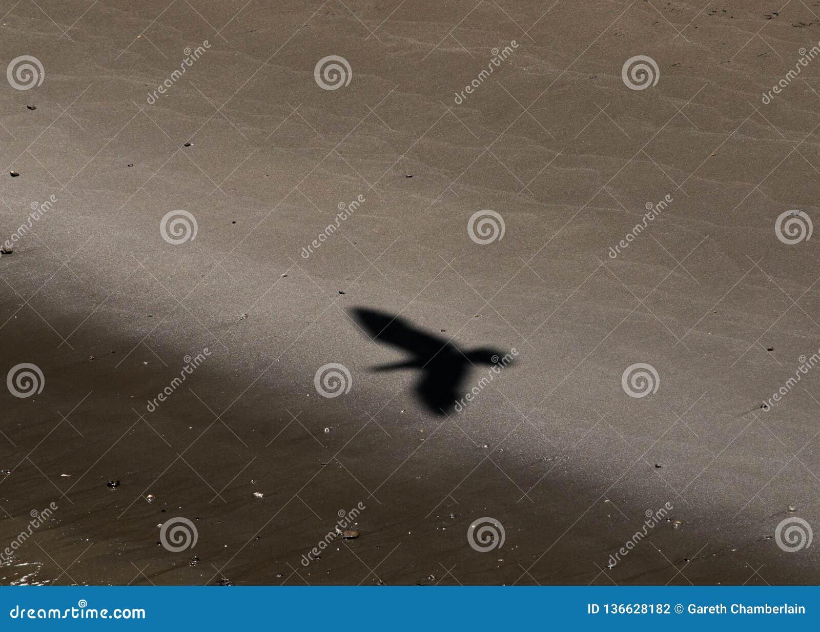 Het silhouet van vlucht lucht