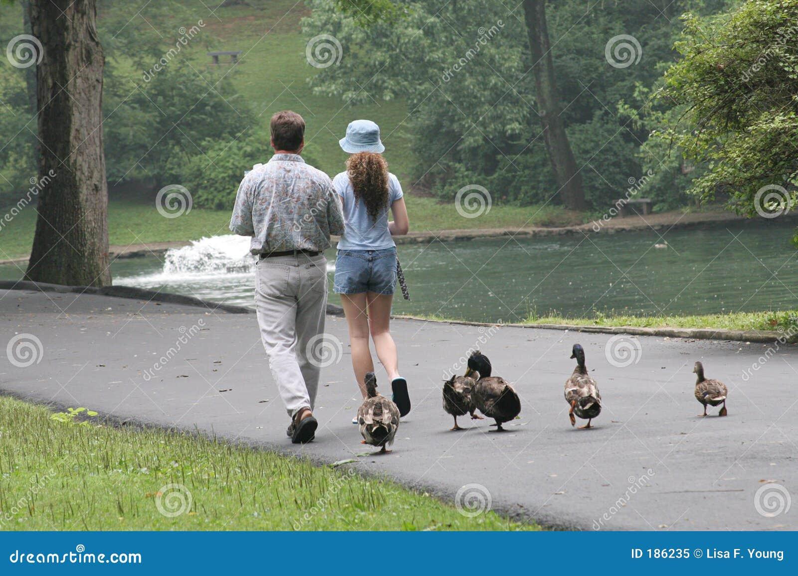 Het slepen Duckies