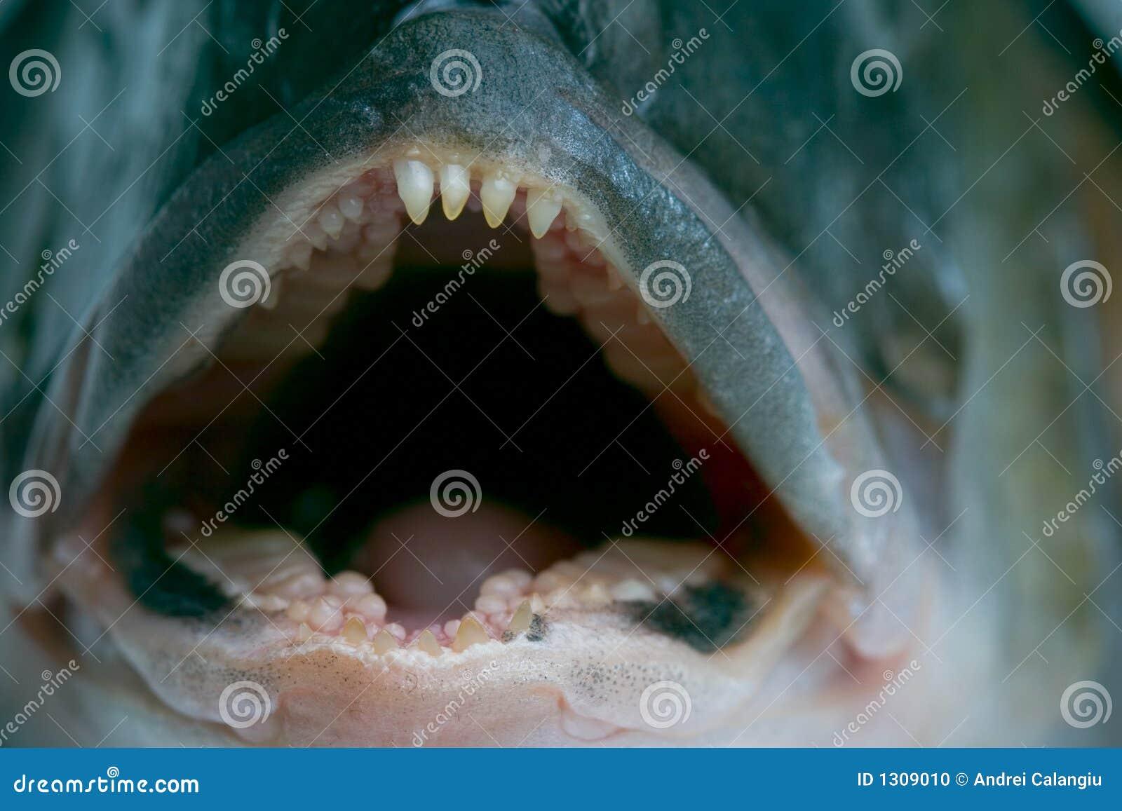 Het sluimeren van tanden