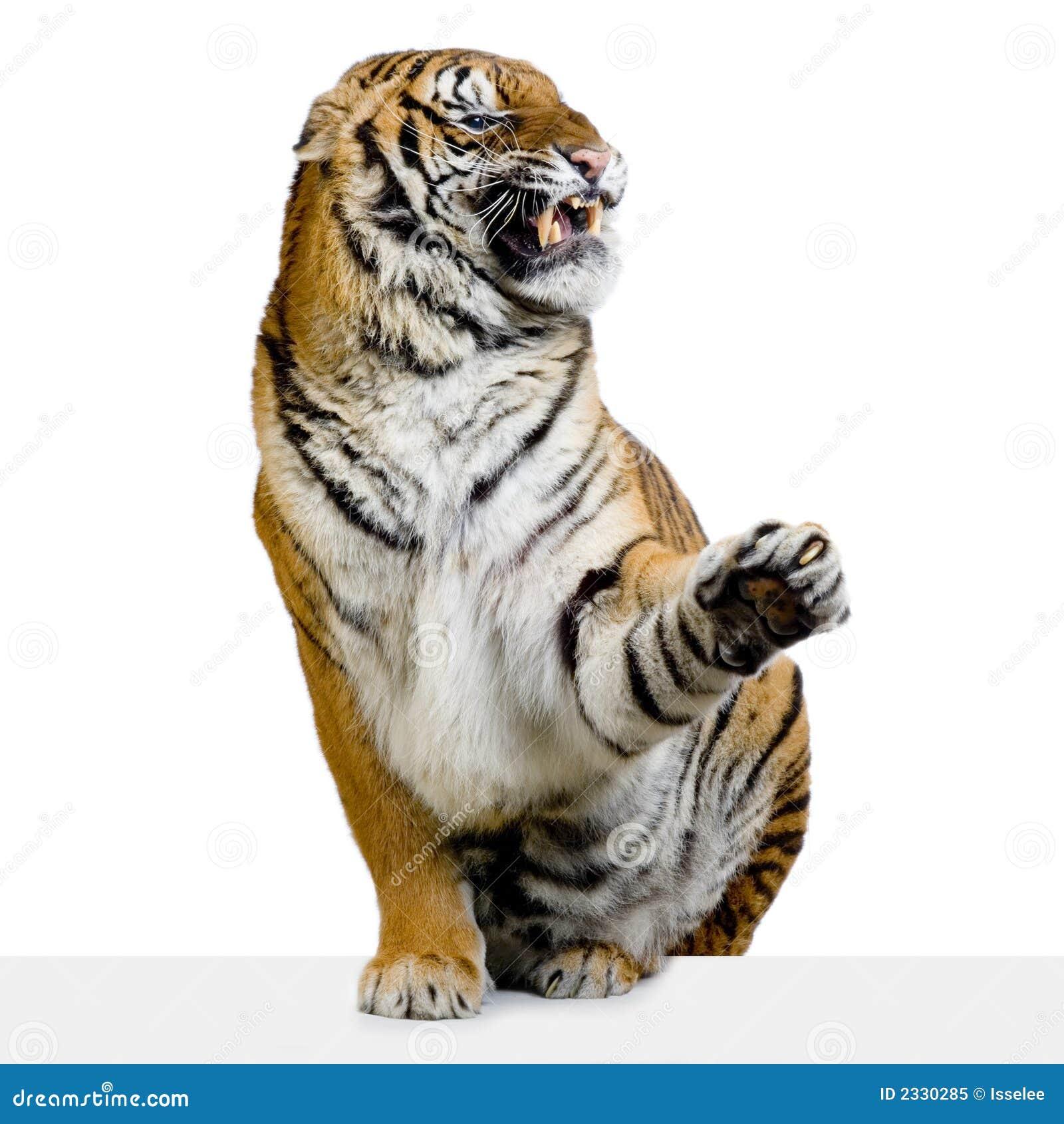 Het Snauwen van de tijger