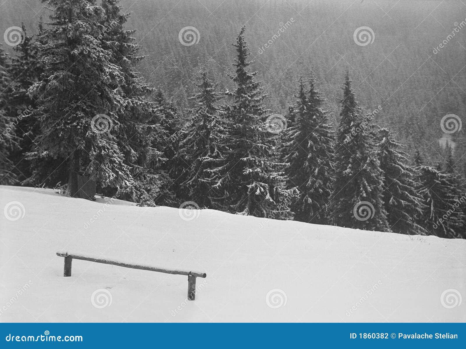 Het sneeuw Behandelde Bos van de Berg