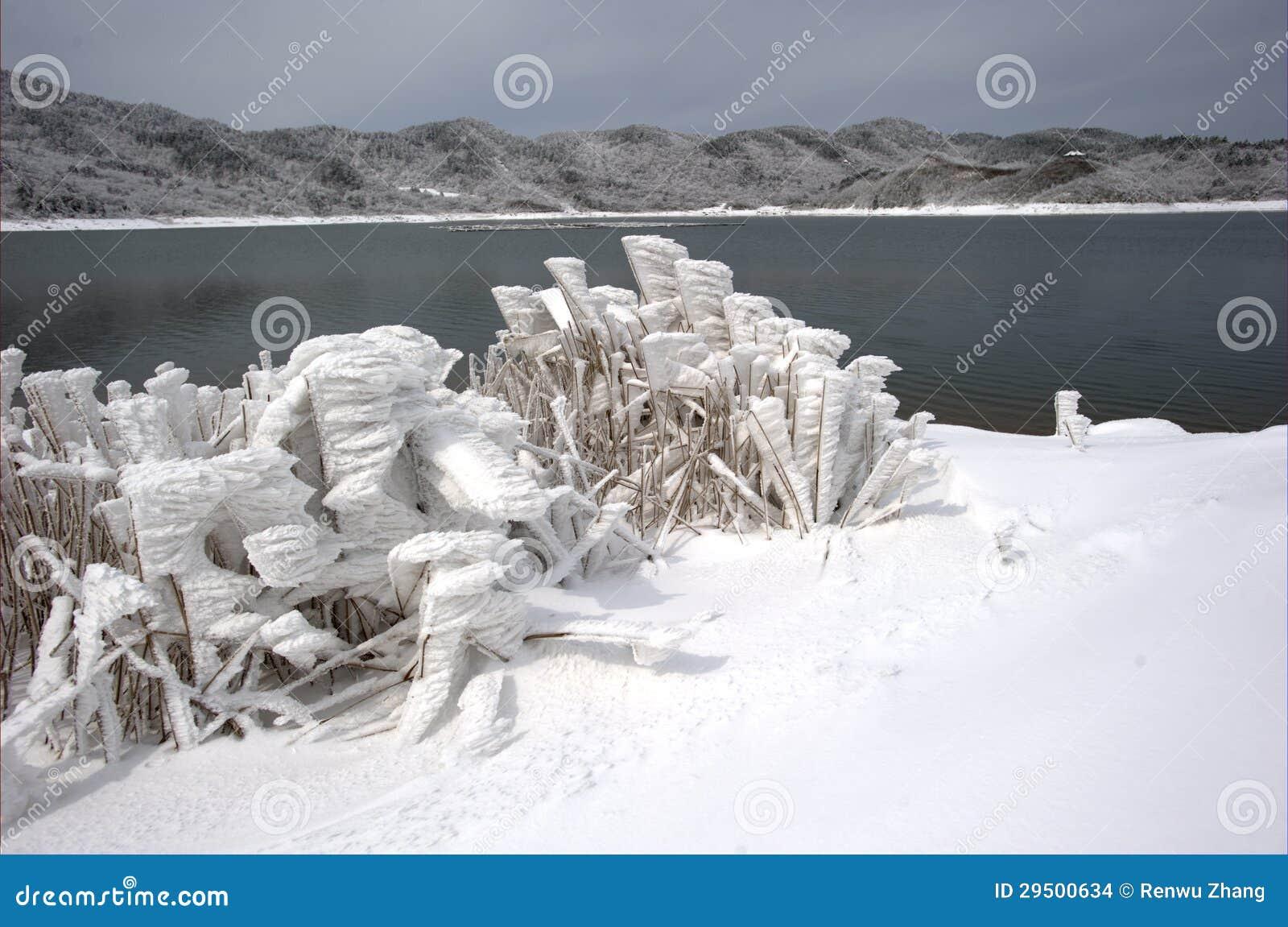 Het sneeuwlandschap