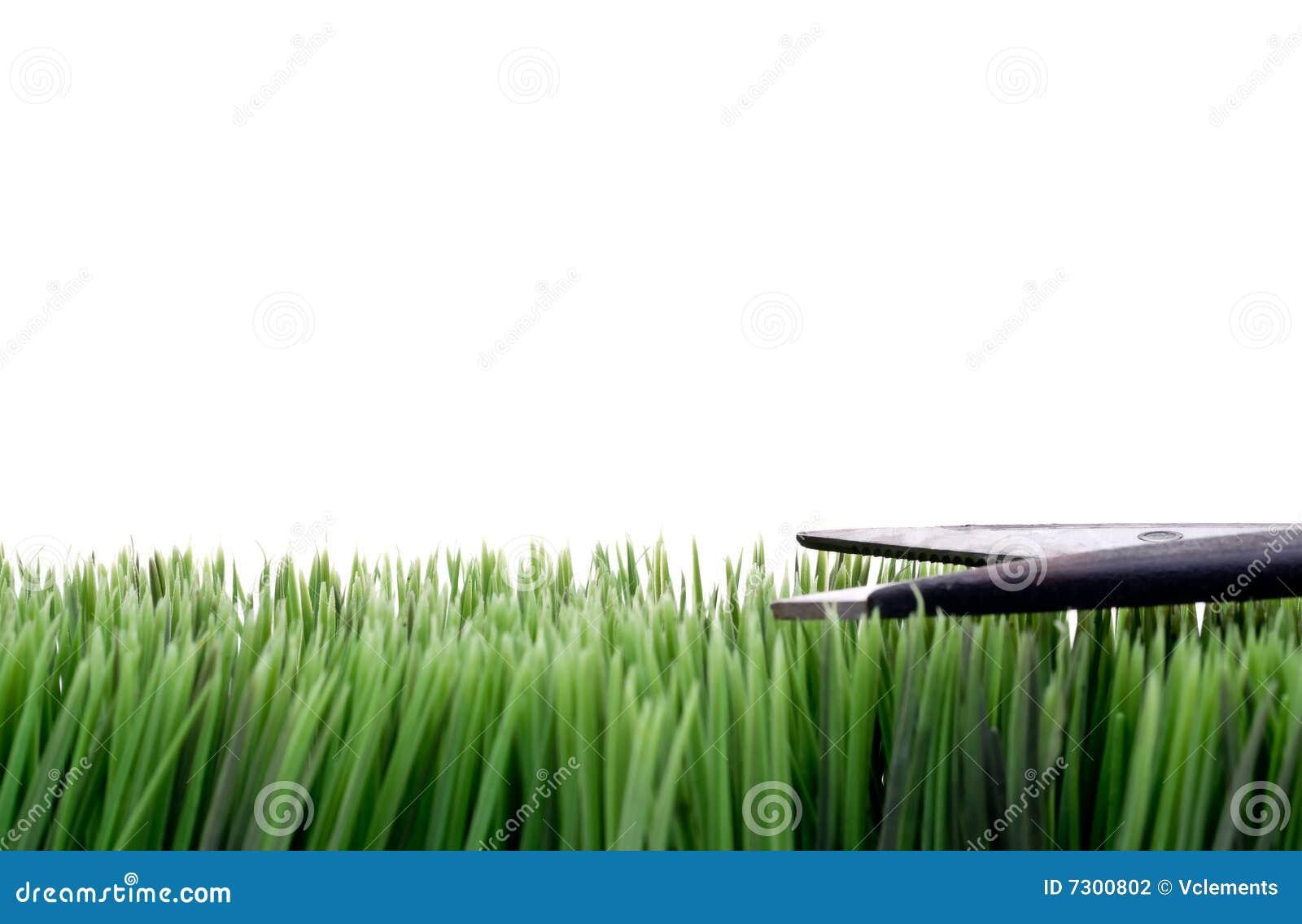 Het snijden van het gras met schaar