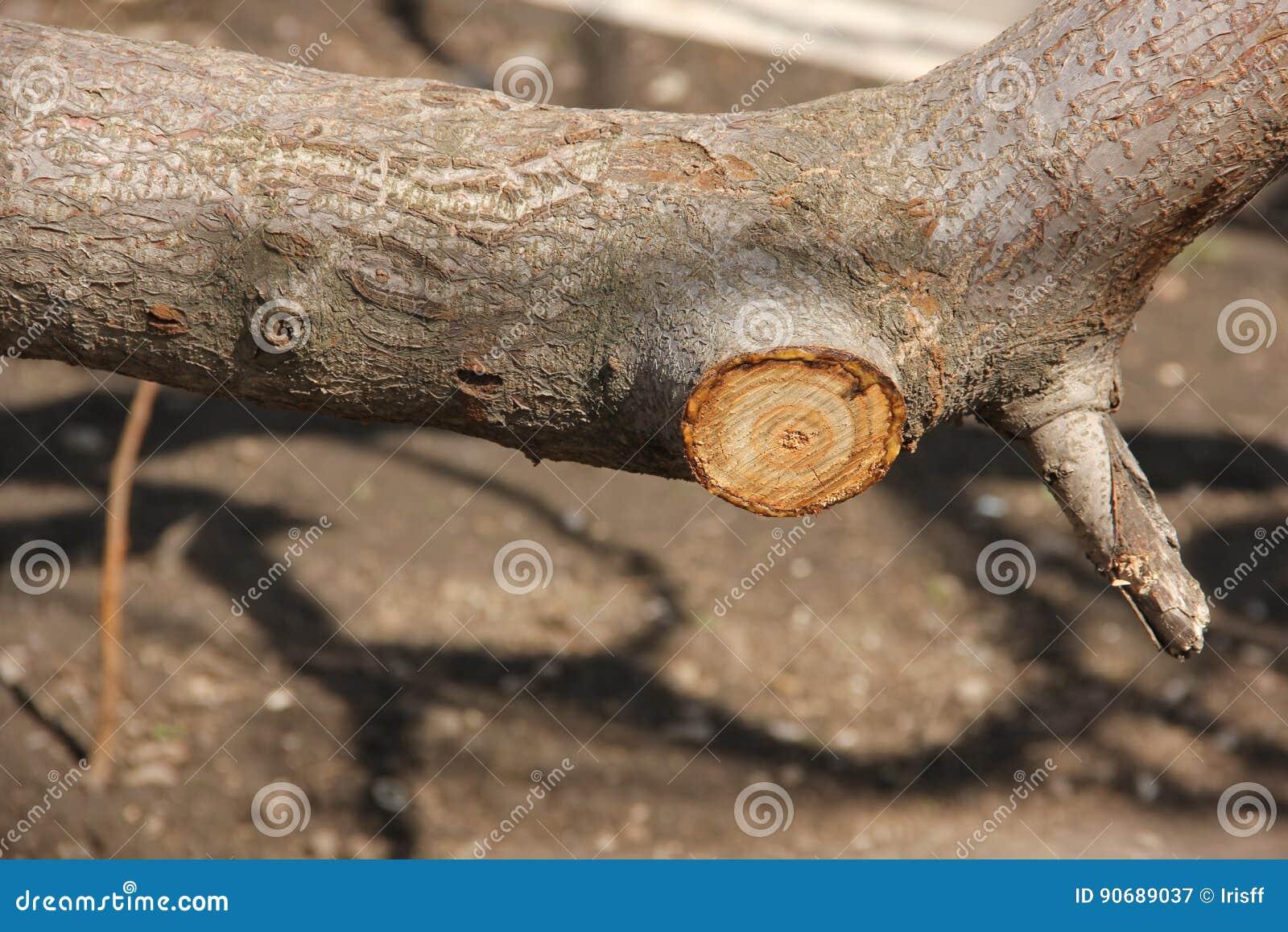 Het snoeien van bomen, fragment