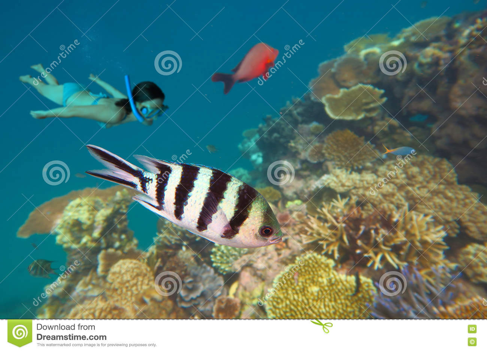 Het snorkelen in het Grote Barrièrerif Queensland Australië