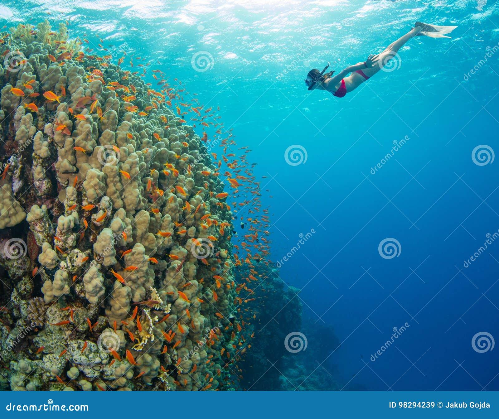 Het snorkelen vrouw die mooie oceaan onderzoeken sealife, onderwaterp