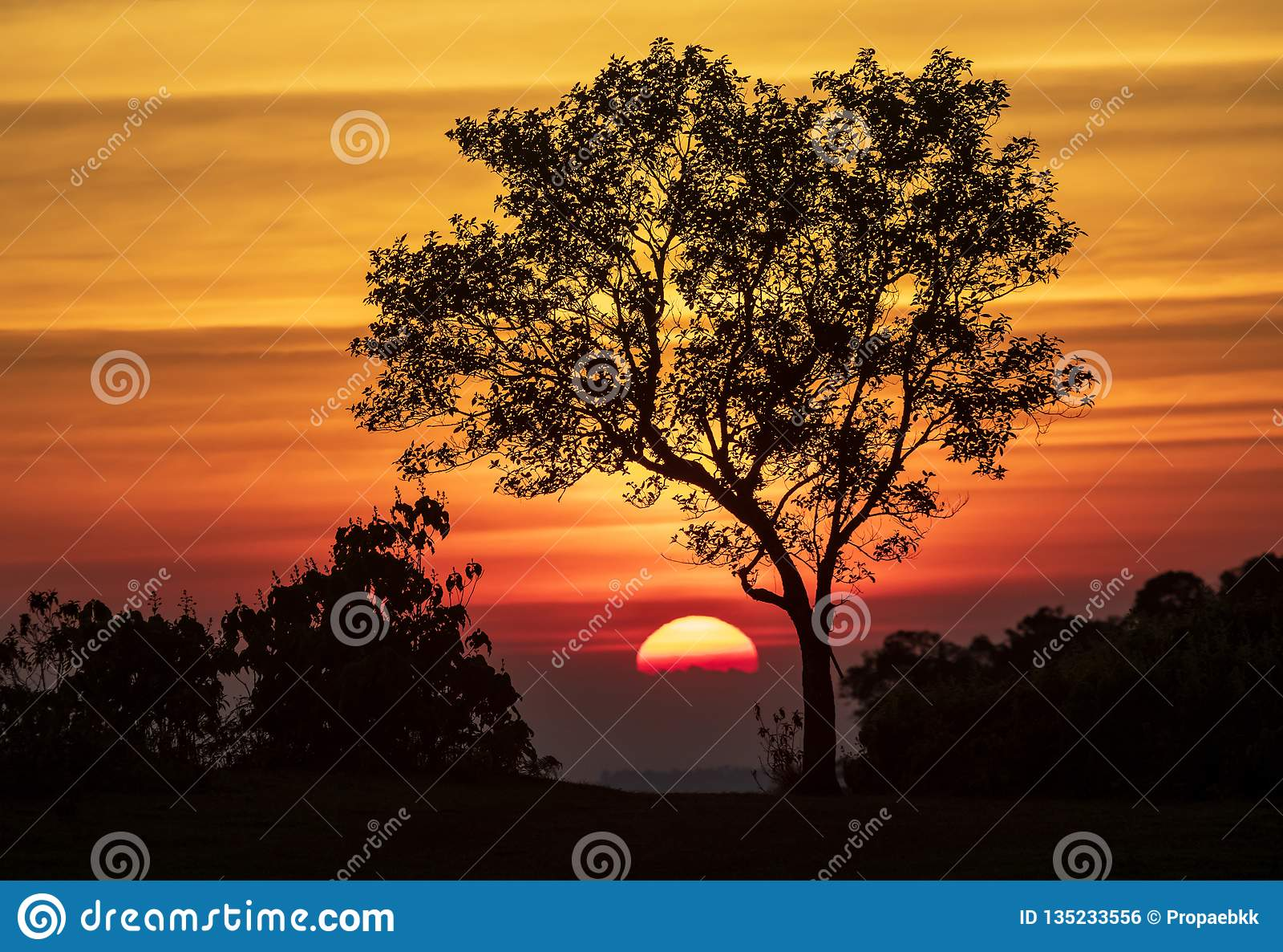 Het spectrum van zonsondergang en silhouetachtergrond op bomen