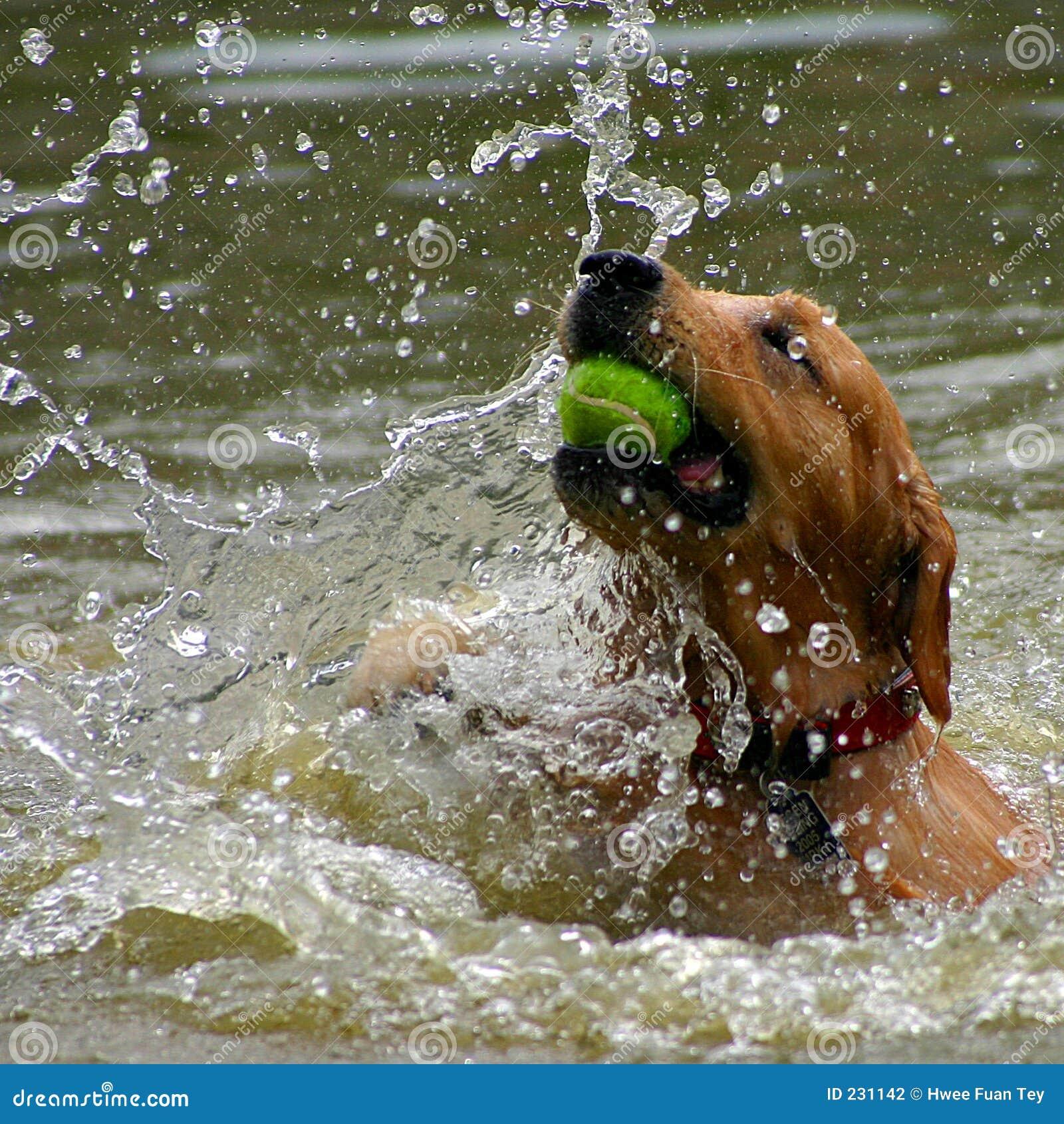 Het Spel van de hond