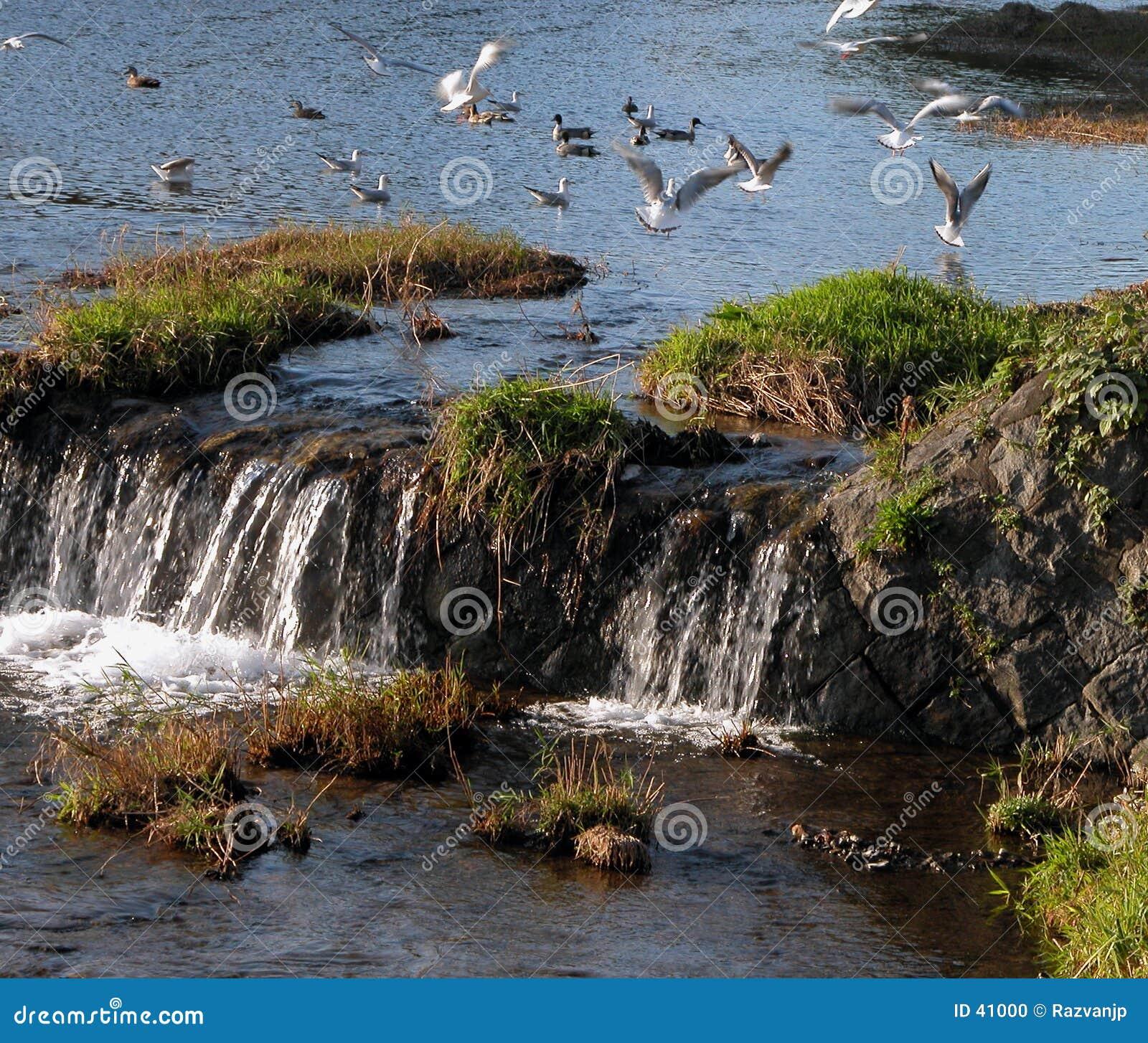 Download Het spel van vogels stock foto. Afbeelding bestaande uit beeld - 41000