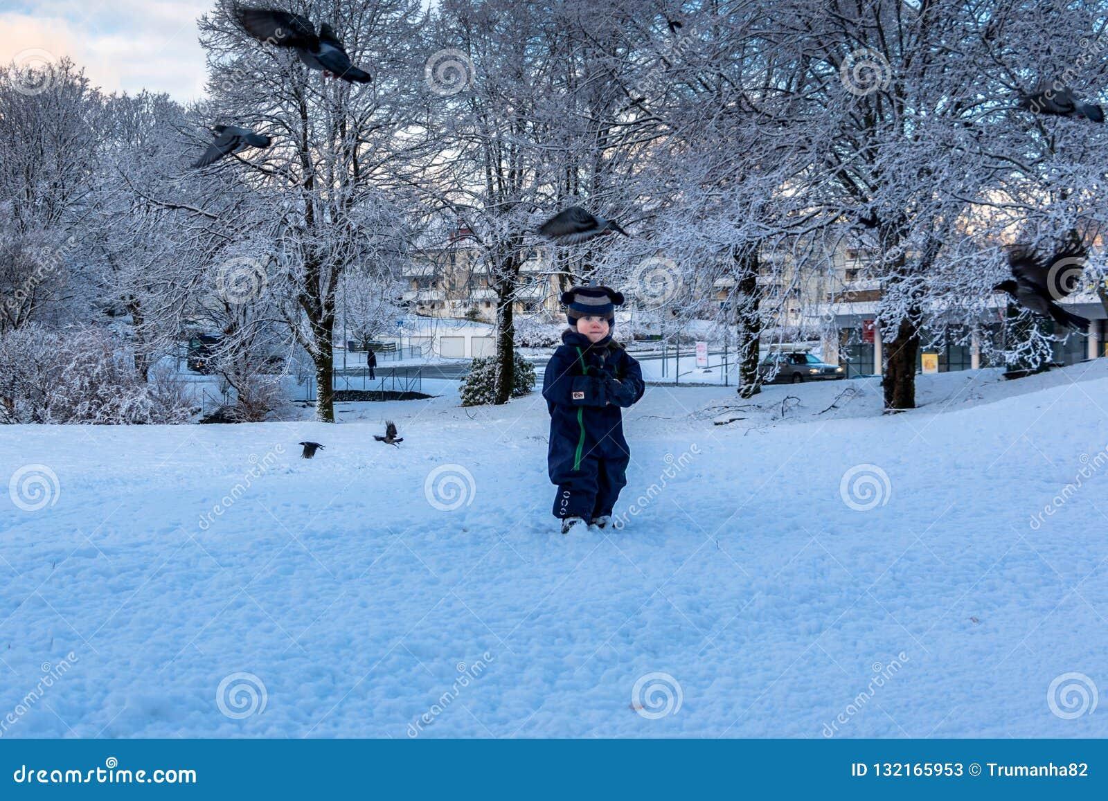 Het spelen met Vogels in de Winter