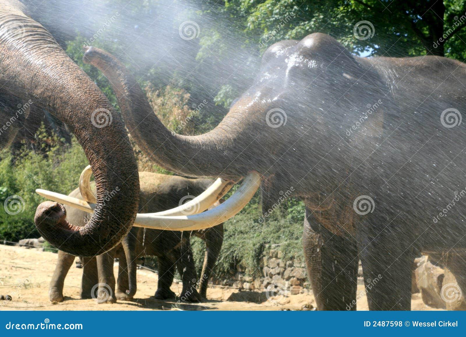 Het spelen olifanten in de zomer