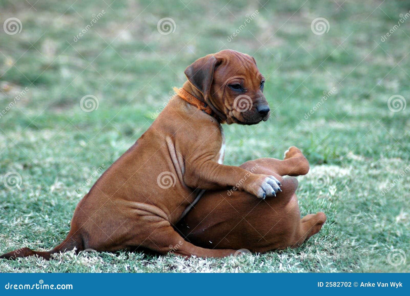Het spelen puppy