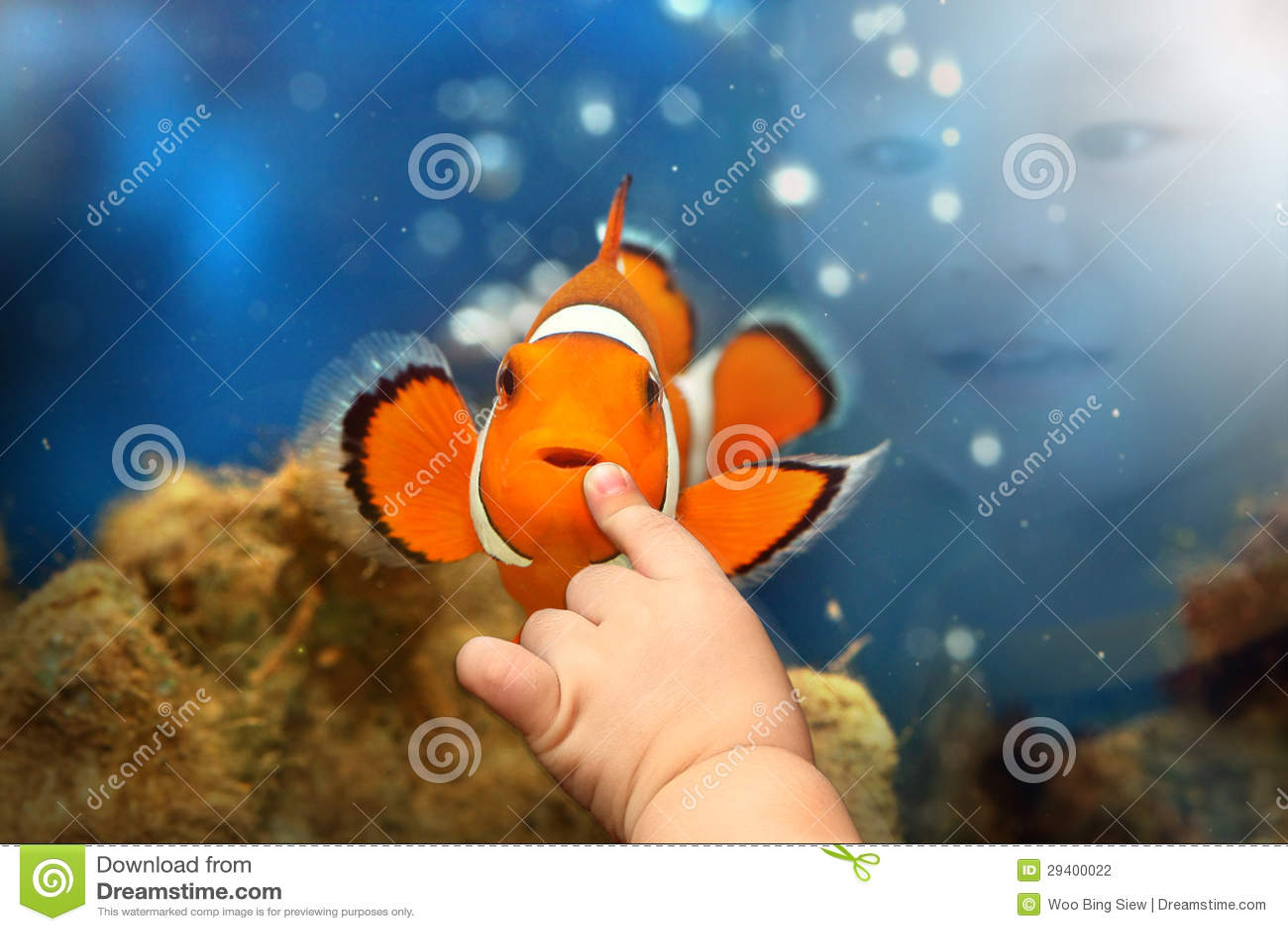 Het spelen van de jongen met de vissen van de Clown Nemo
