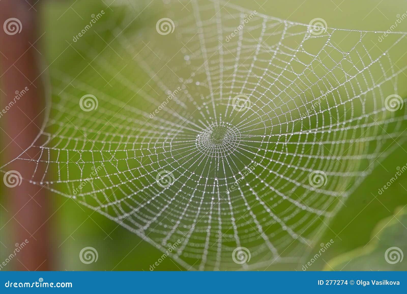 Het spinneweb van de ochtend