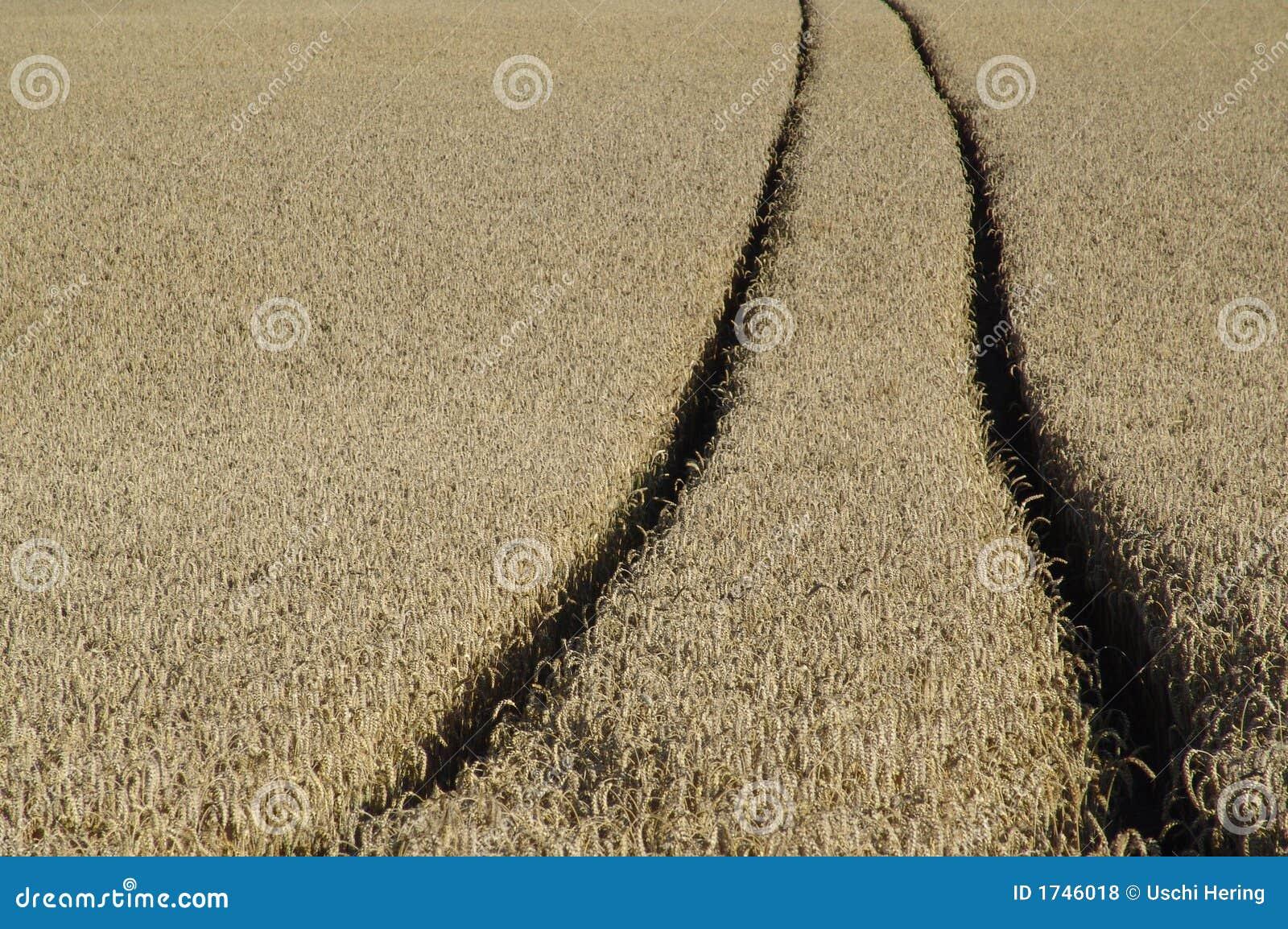 Het spoor van de tarwe