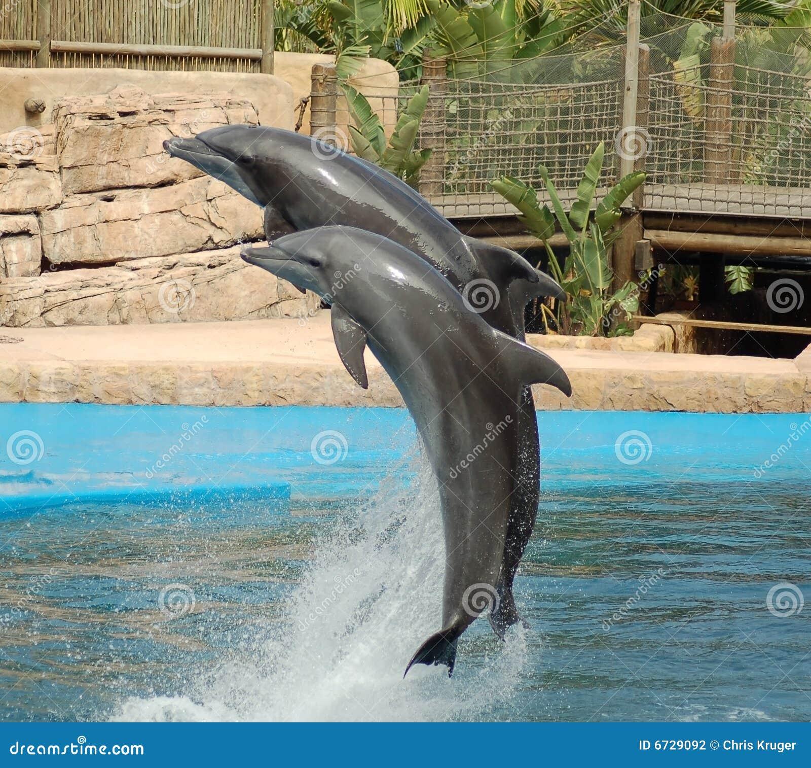 Het Springen van twee Dolfijnen