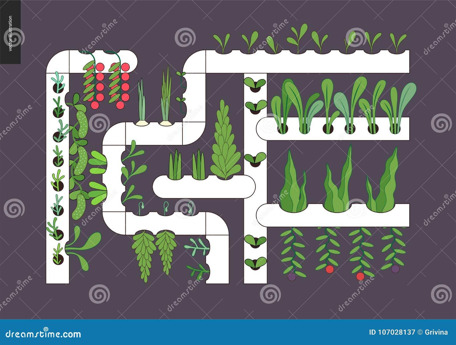 Het stedelijke landbouw en tuinieren - Hydrocultuur