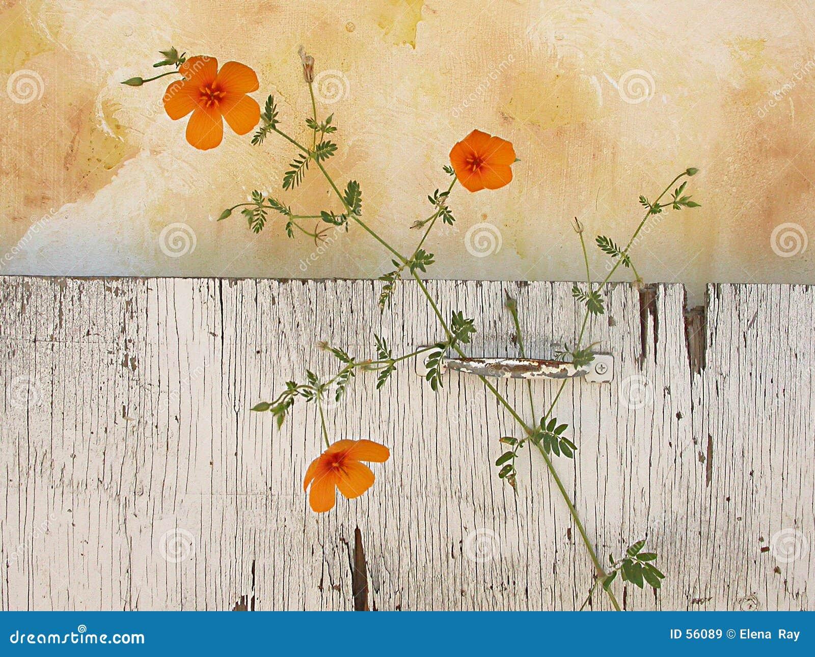 Het Stilleven van Wildflowers