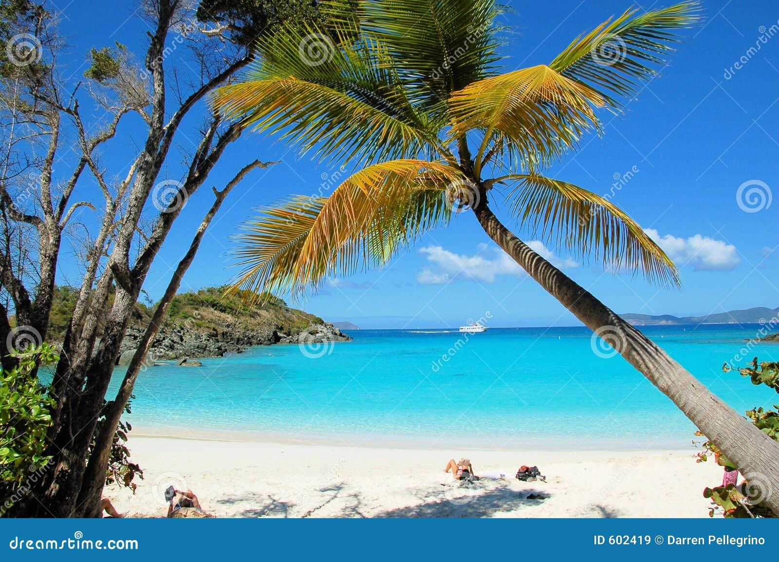 Het Strand van de boomstam