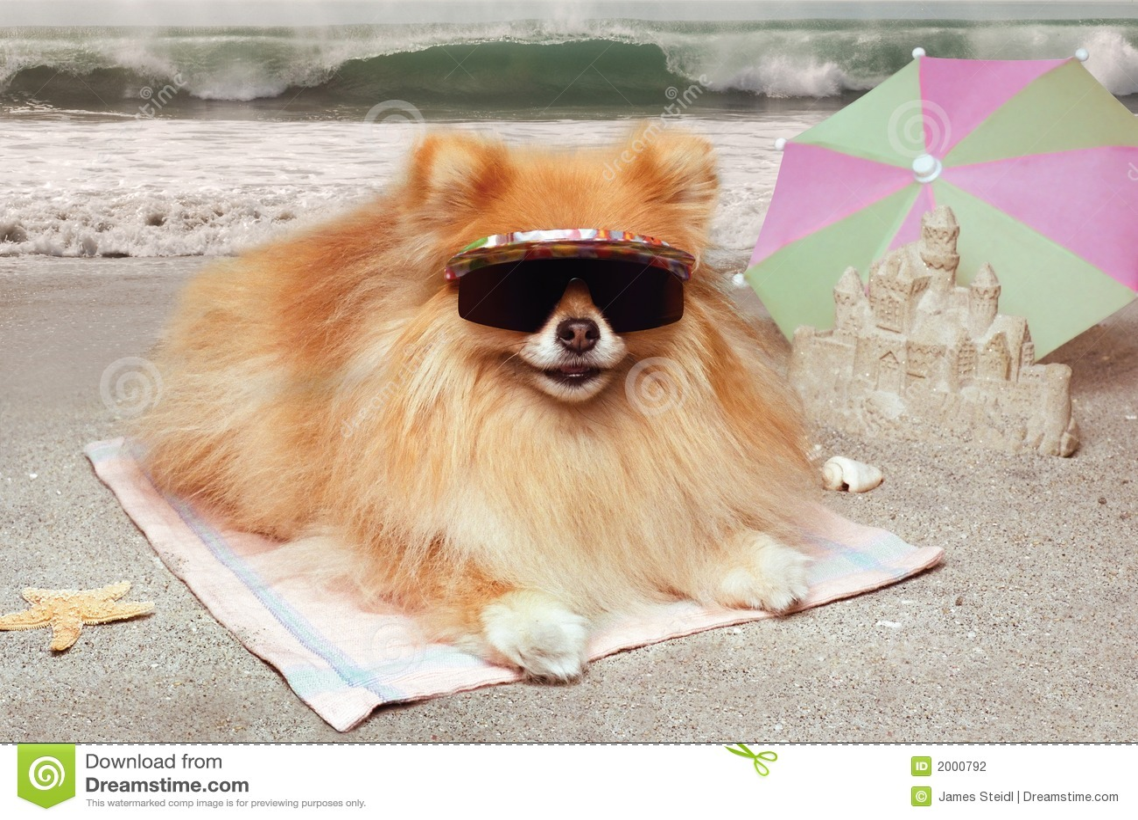 Het strand van de hond