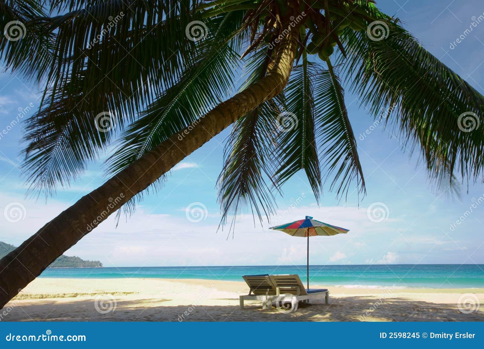 Het strand van de kokosnoot