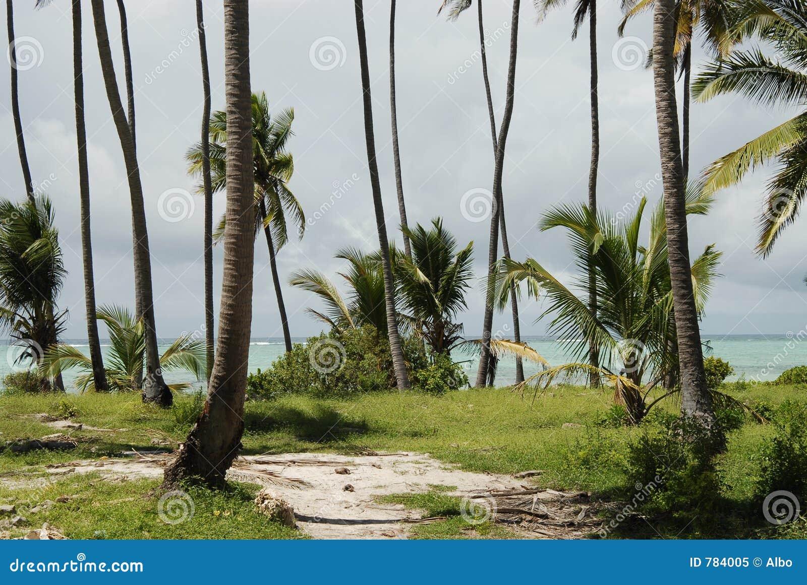 Het strandvegetatie van Zanzibar