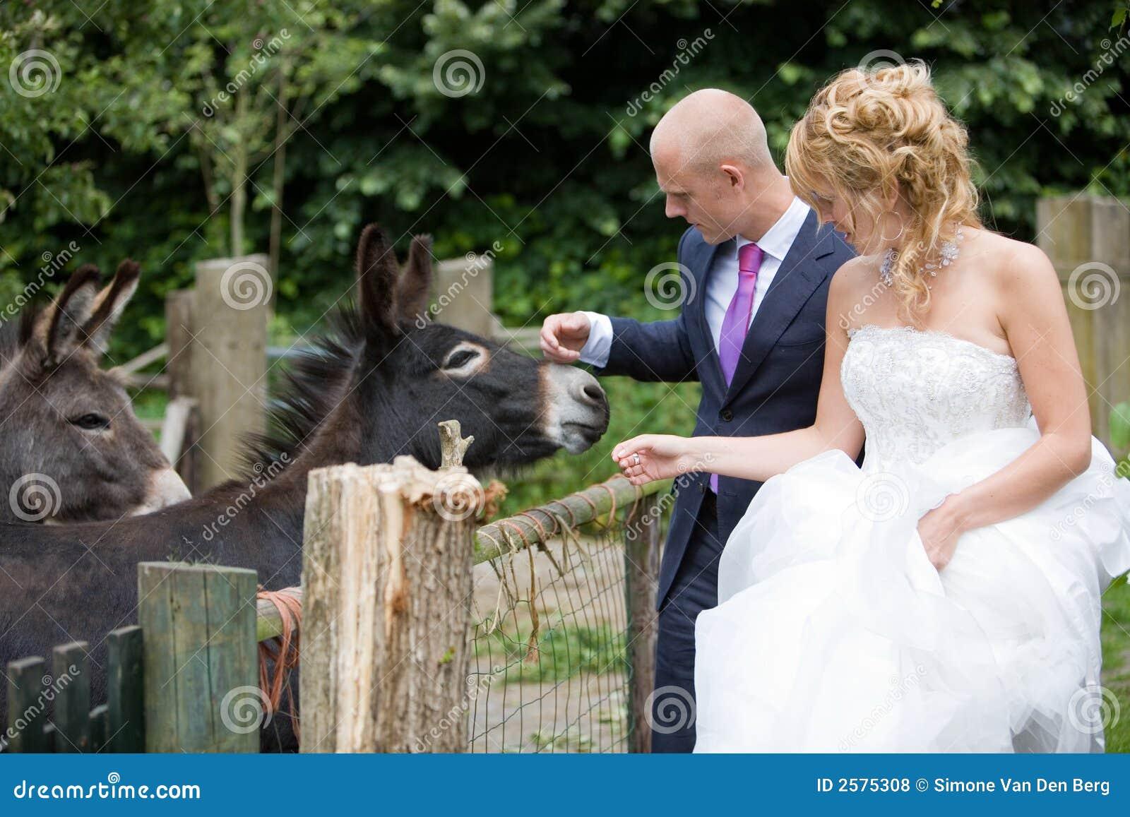 Het strijken van de ezel