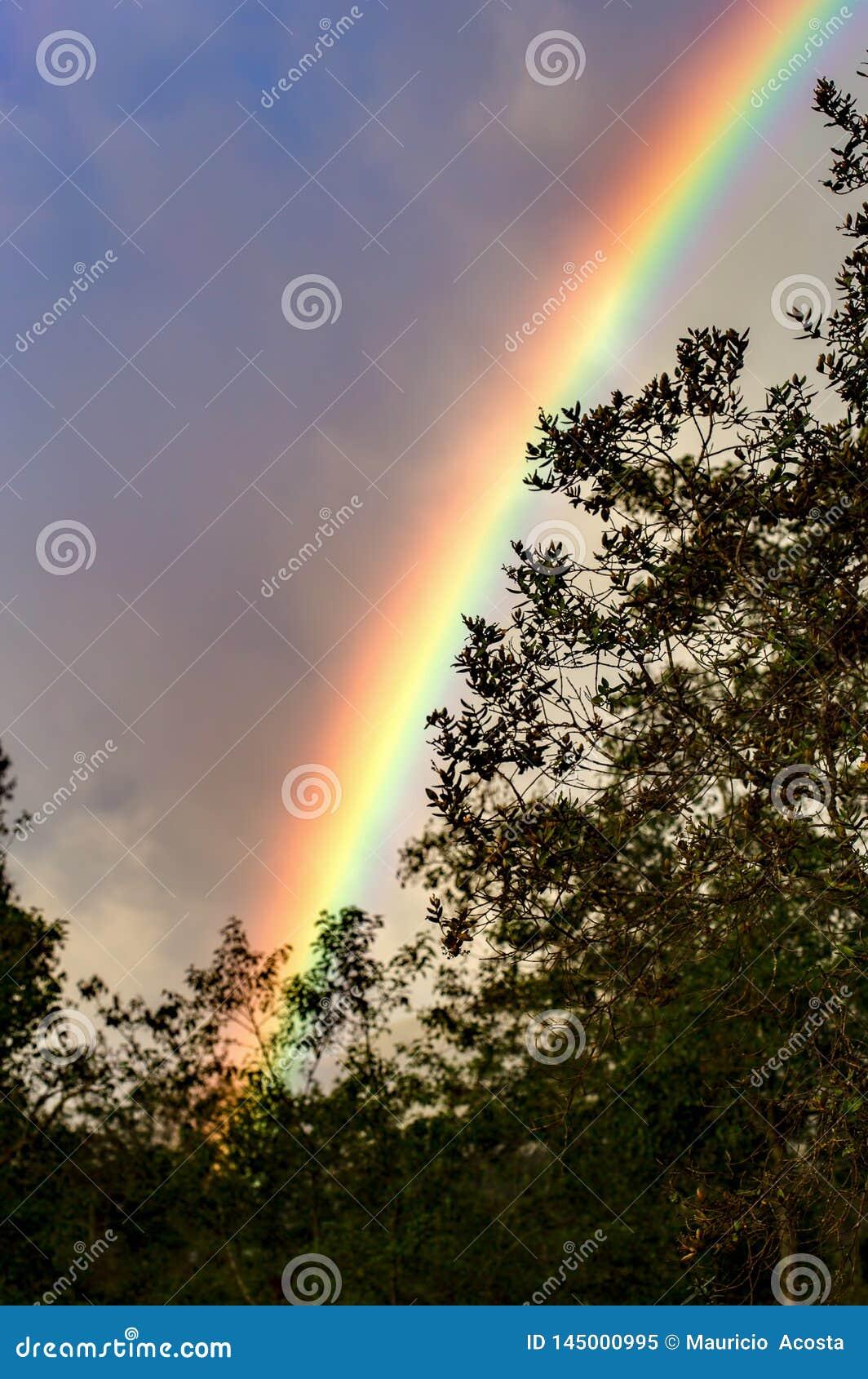 Het stuk van de regenboog toont achter het bos
