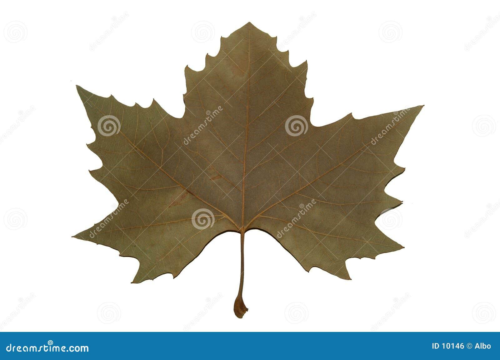 Het symbool van Canada