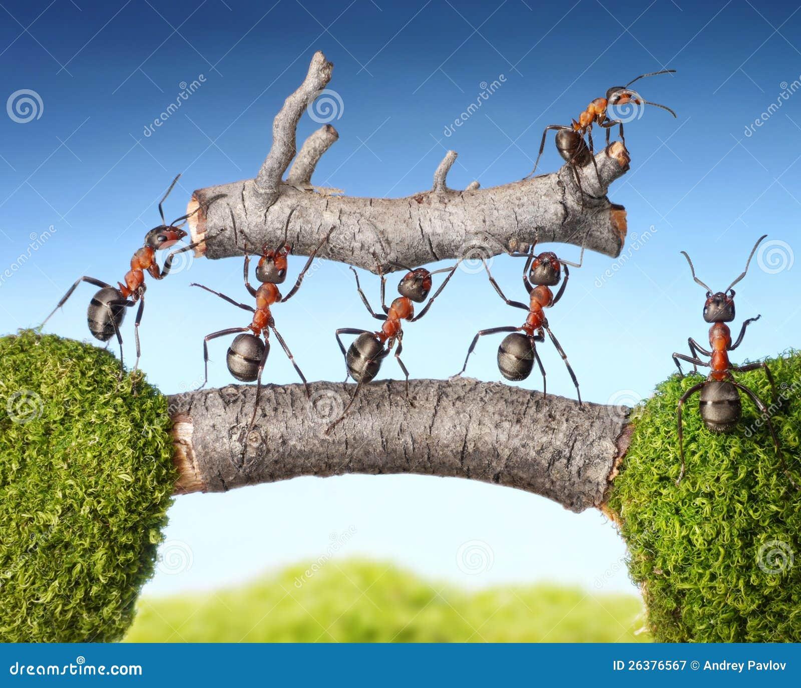 Het team van mieren draagt openings van een sessiebrug, groepswerk