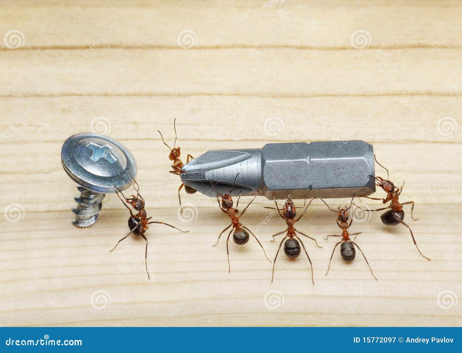 Het team van mieren draagt schroevedraaier, groepswerk