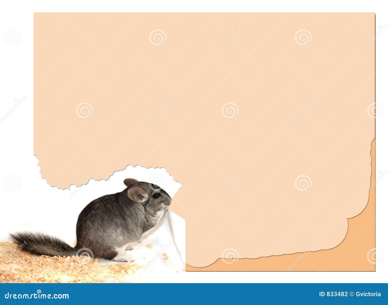 Het teken van de chinchilla
