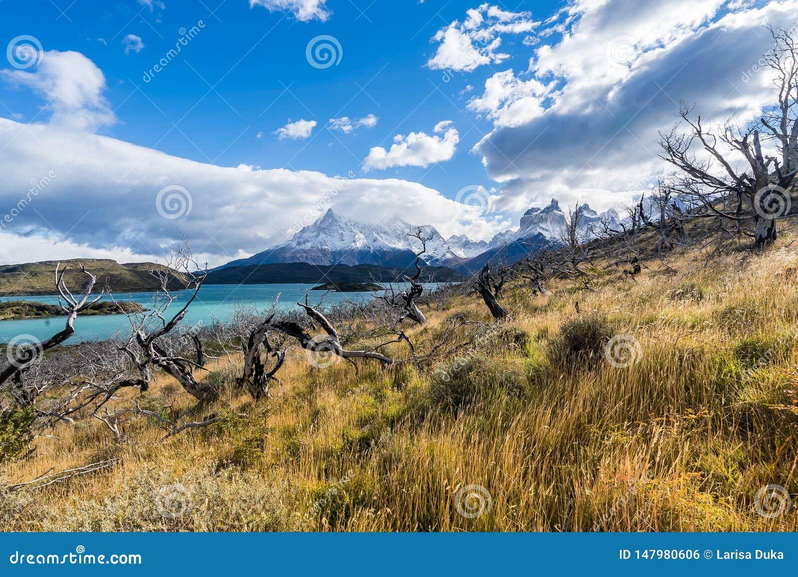 In het Torres del Paine nationale park, Patagoni?, Chili, Lago del Pehoe