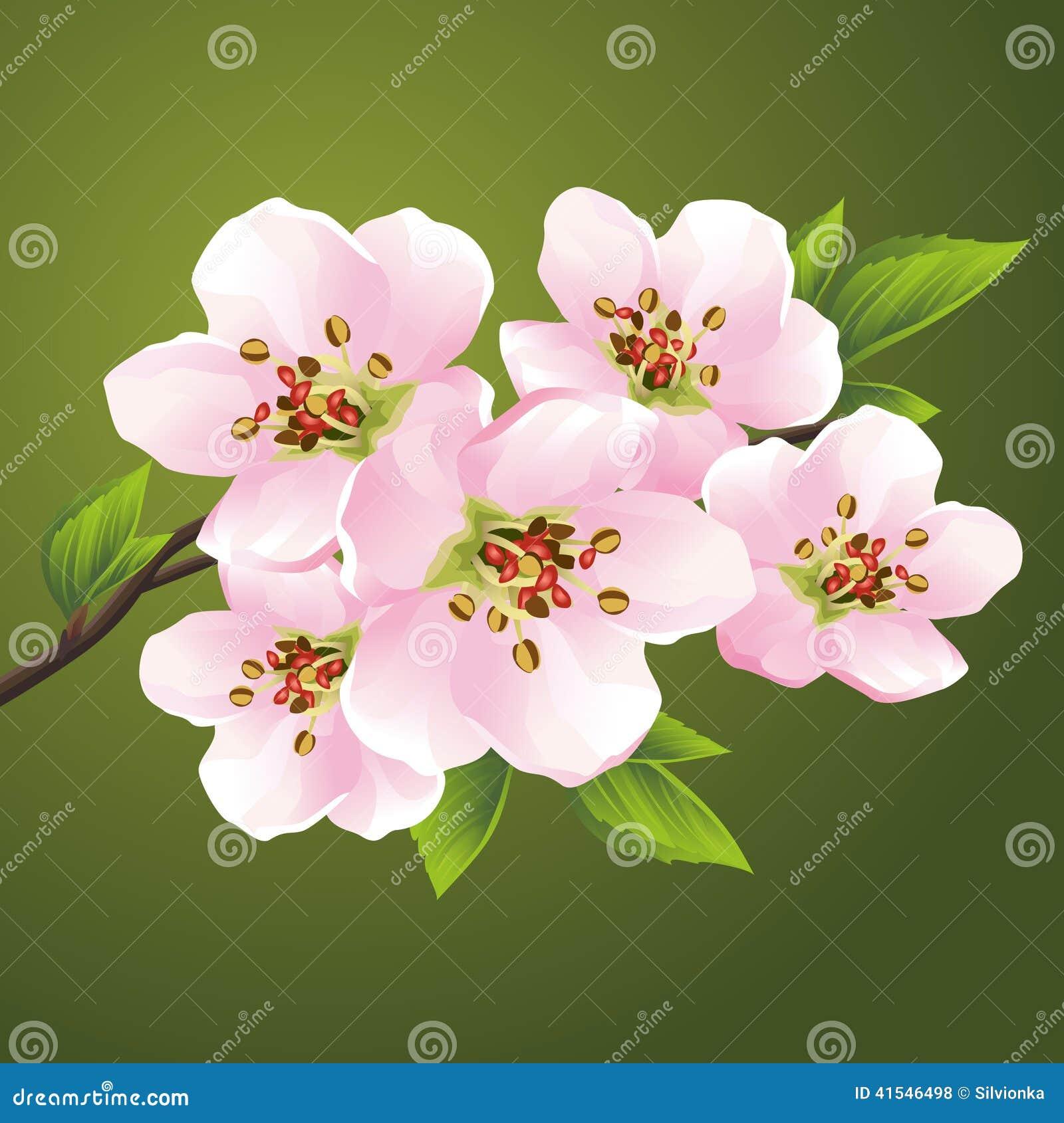 Het Tot Bloei Komen Sakura - Japanse Kersenboom Vector Illustratie ...
