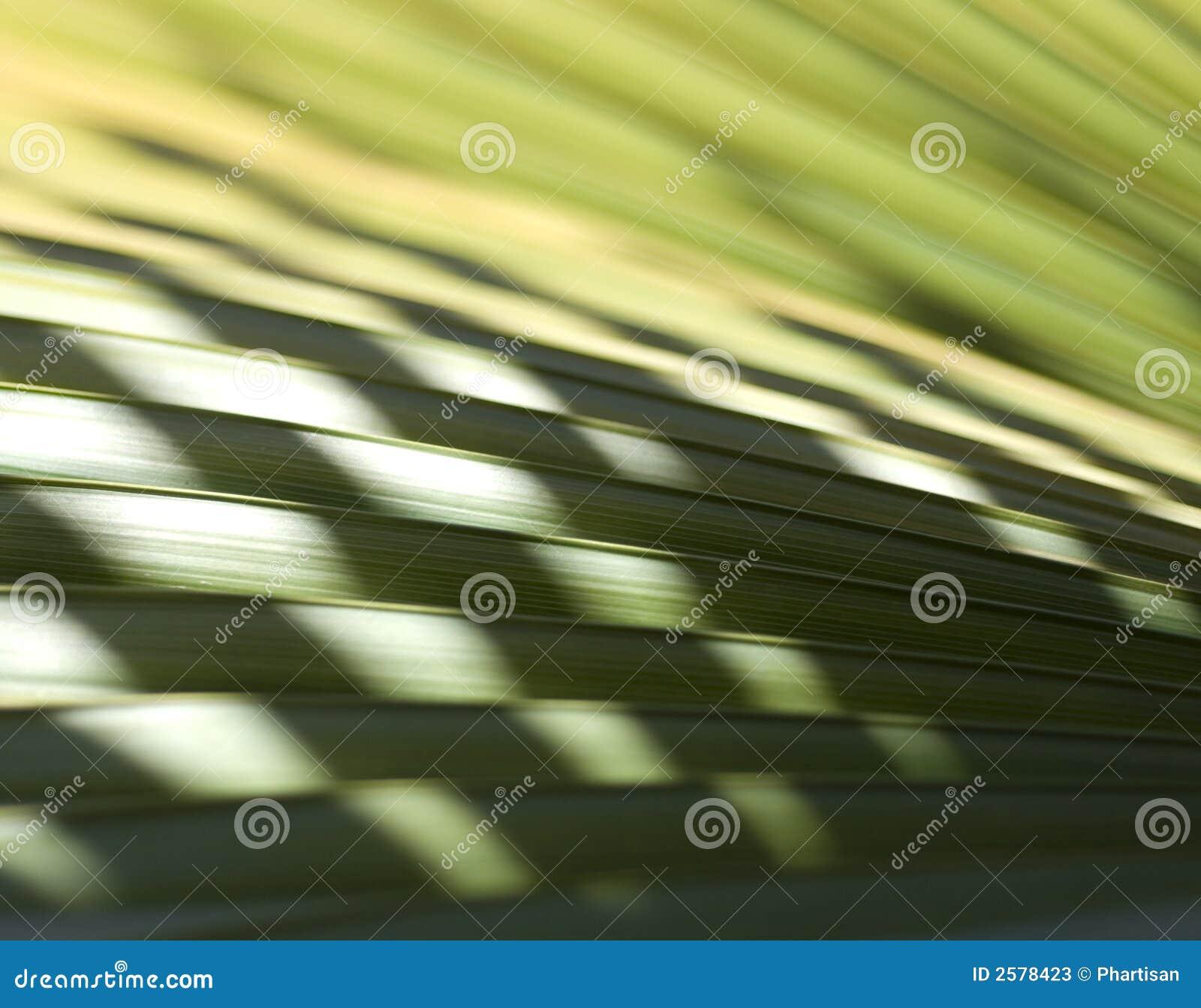 Het tropische Detail van de Palm