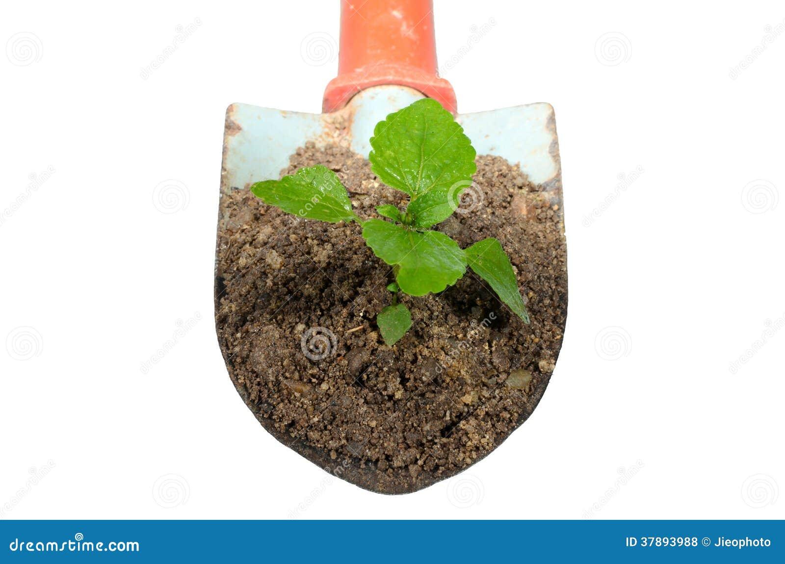 Het tuinieren troffel en installatie op isolate.