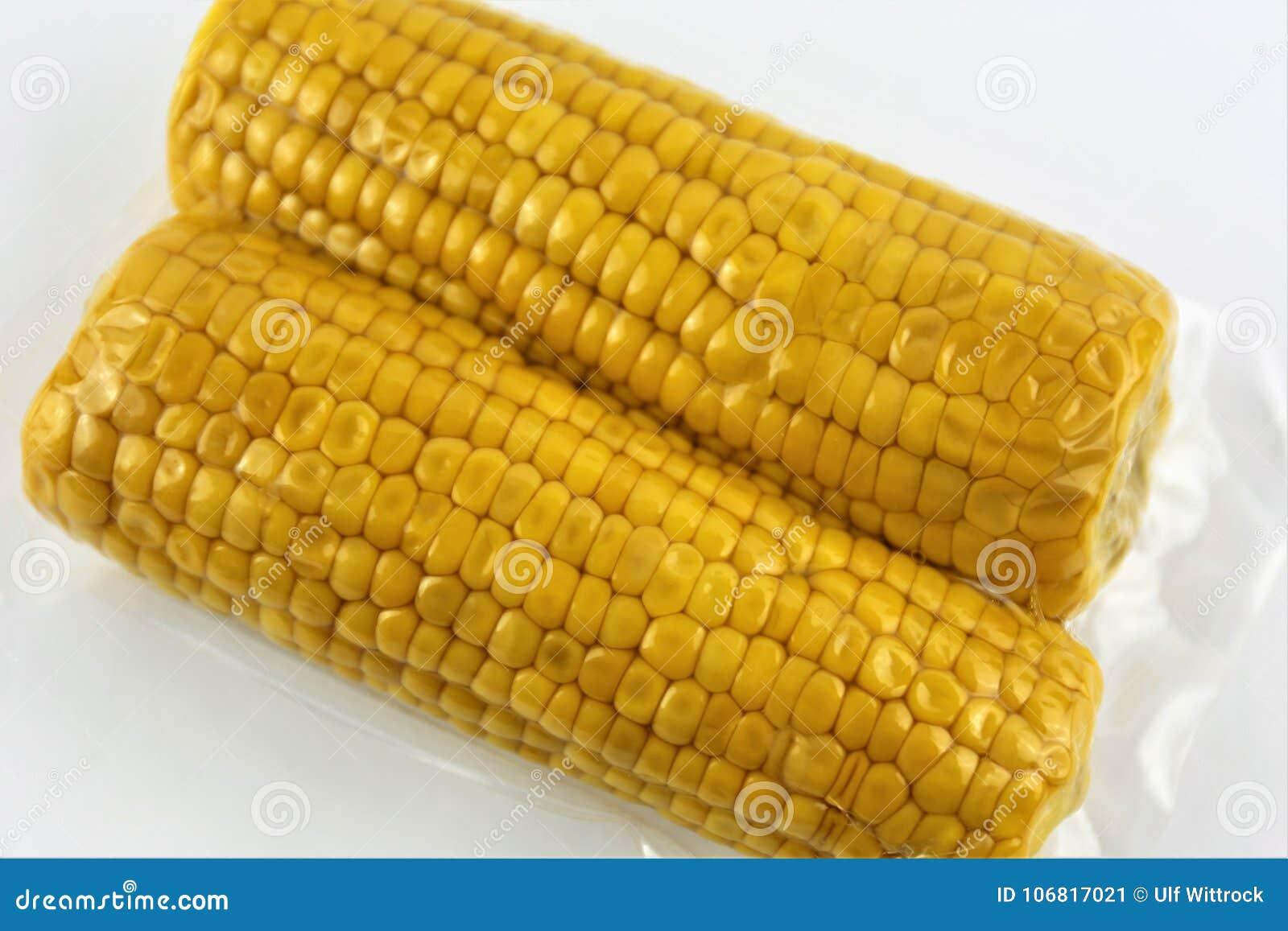 Het vacuüm verzegelde verse maïskolven voor sous vide kokend knipsel op wit