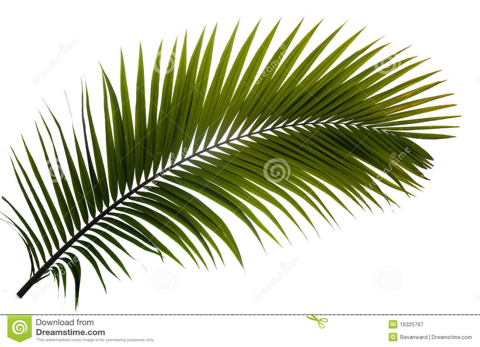 Het varenblad van de palm
