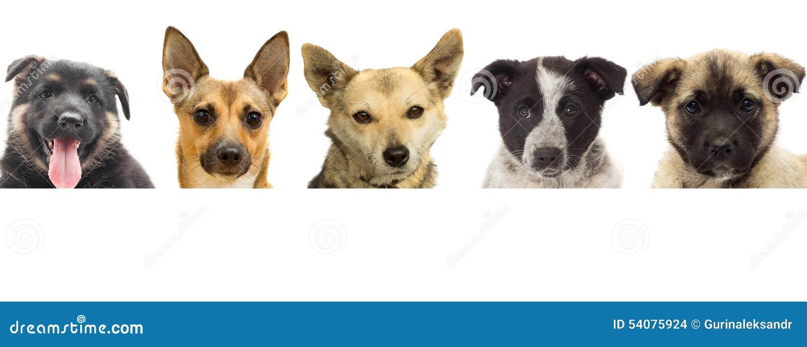 Het vastgestelde puppy gluren