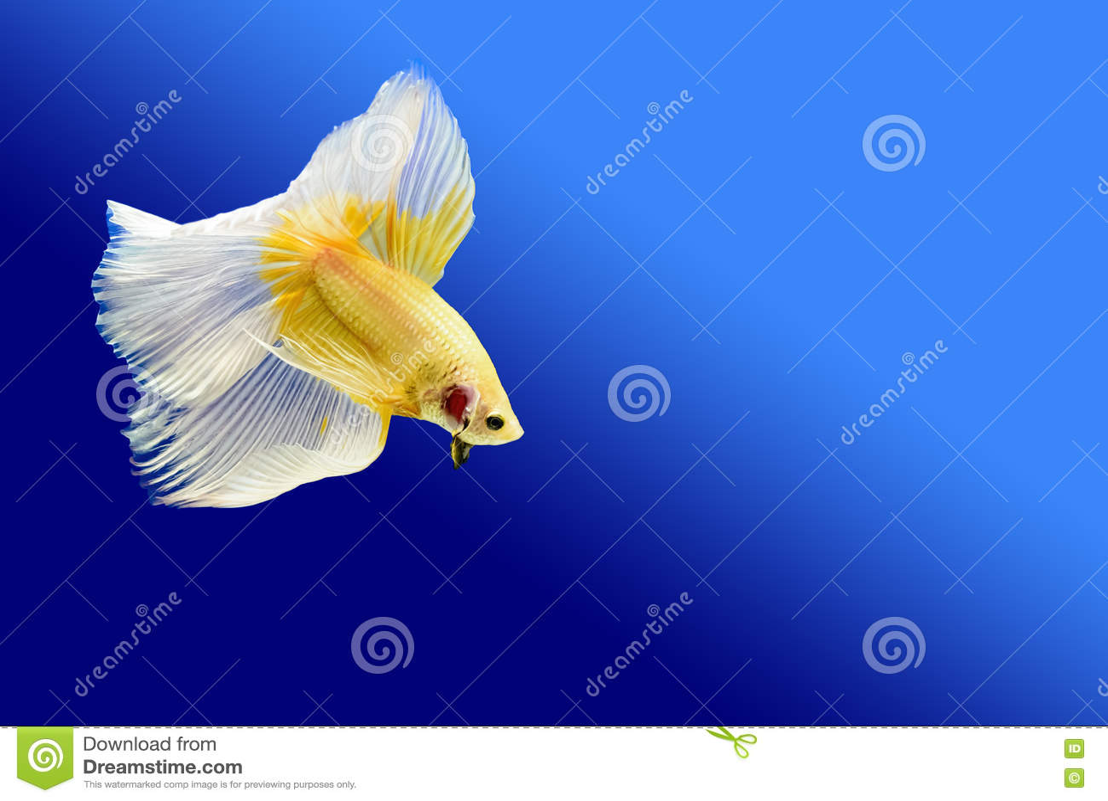Het vechten Vissen
