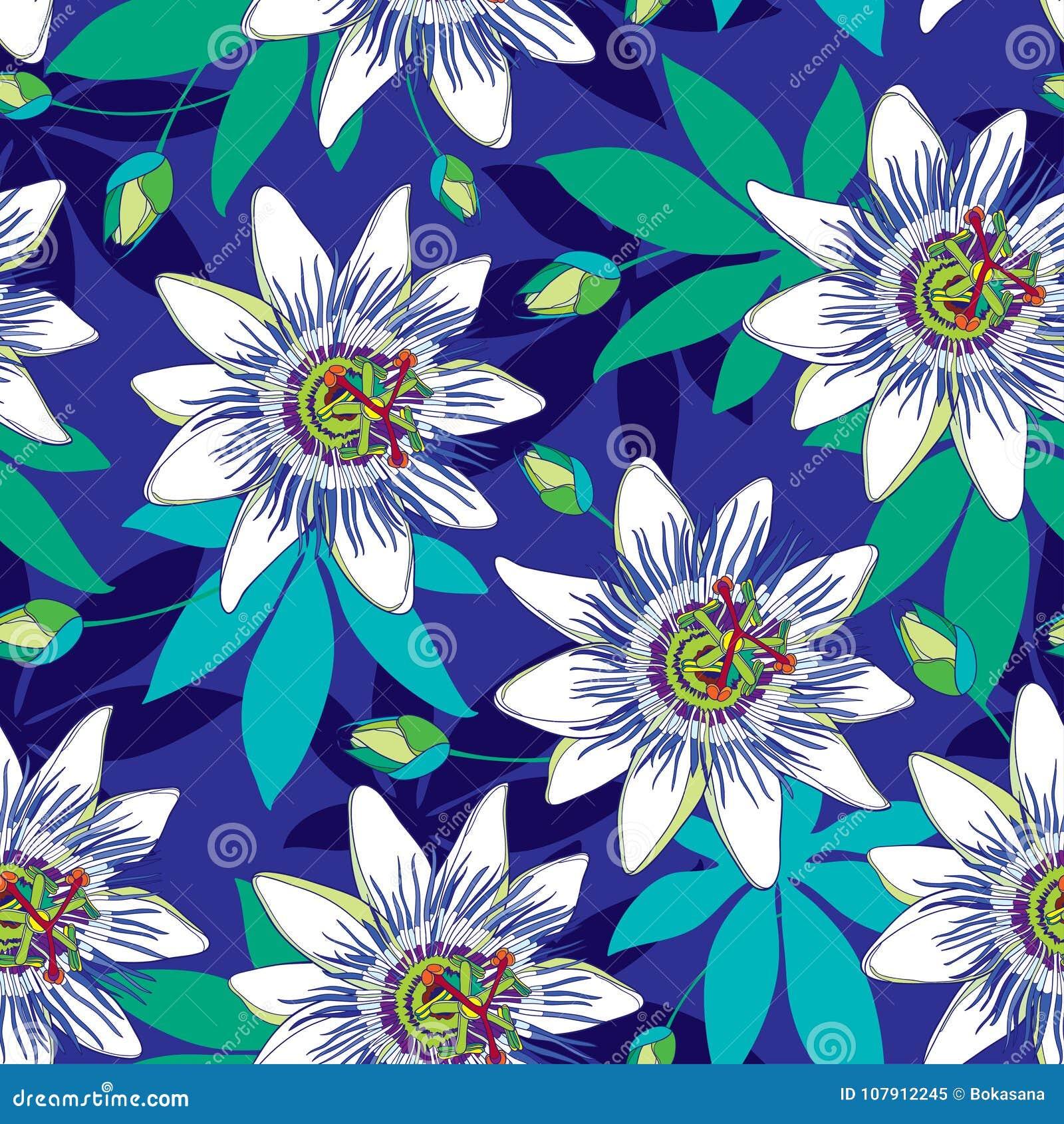 Het vector naadloze patroon met van de overzichts tropische Passiebloem of Hartstocht bloemen in blauw en wit, ontluikt en blader